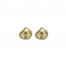 Gold Baby Shell Stud Earrings