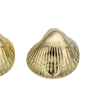 Gold Baby Shell Stud Earrings detailed